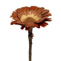Repens rozetlamp 8-9cm 25st