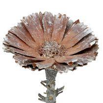 Repens rozet 6-7cm wit gewassen 25st