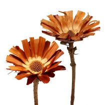 Repens rozet Super 10 - 12cm 20st