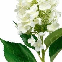 Pluimhortensia roomwit, kunsthortensia, zijdebloem 98cm