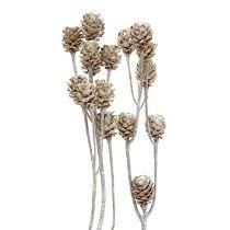 Salignum witgekalkt 25st
