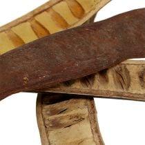 Scaletta peulen naturel 25cm - 50cm 25st