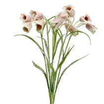 Schaakbloem wit-roze gesneeuwd L45cm 6st