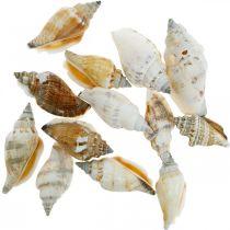 Decoratieve slakkenhuizen leeg in een bastnet Zeeslakken 400g