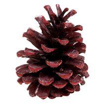 Zwarte dennenappel mat rood 5-7cm 1kg