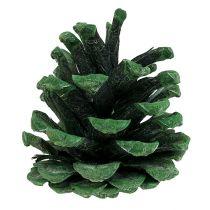Zwarte dennenappel mat groen 5-7cm 1kg