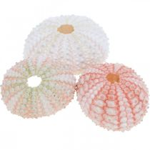 Zee-egel decoratie maritiem roze, wit, groen zomerdecoratie 12st