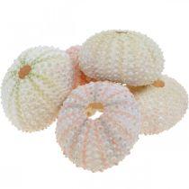 Maritiem deco zee-egelhuis roze, wit scatter deco 55st