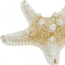 Starfish Nature Maritime Tafeldecoratie 5-8cm Real Starfish 20st
