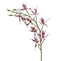 Spinorchideeën Brassia Roze-Wit 108cm 3st
