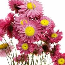 Strobloem in een bos Roze gedroogde bloemen 25g