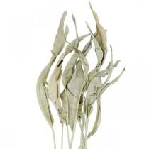 Strelitzia blaadjes gedroogd groen mat 45-80cm 10st