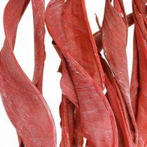 Strelitzia bladeren rode frosted droge bloemen 45-80cm 10st