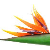 Strelitzie paradijsvogel bloem 95cm