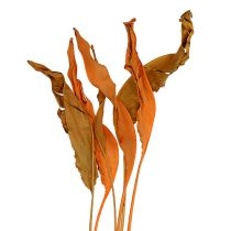 Strelitzia bladeren oranje 120cm 20st
