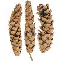 Dennenappels Weymouth Pine Strobus Naturel Gemengd 2,5kg