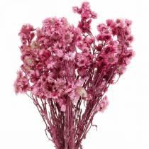 Gedroogde Bloemen Roze Gedroogde Bloemen Boeket Gedroogde Bloemen Roze H21cm