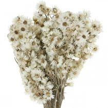 Everlasting Flowers Droogbloemen Boeket Wit Klein 15g