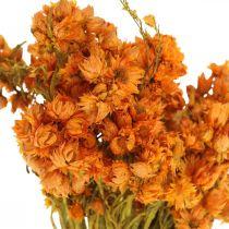 Everlasting Flowers Droogbloemen Oranje Klein 15g