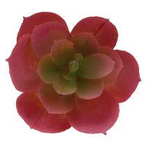 Vetplant Ø5cm roze 6st