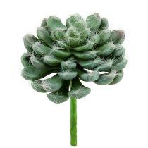 Succulent groen Ø8.5cm L13cm