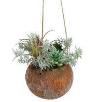 Sappig groen in een pot om op te hangen 24cm