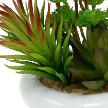 Vetplanten in een pot Ø12cm H11cm 1p
