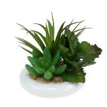 Vetplanten in een keramische pot Ø12cm