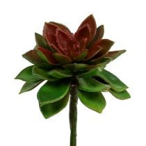 Succulente steenroos 6cm groen 6st