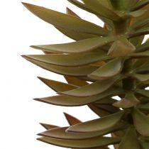 Succulente tak lichtbruin groen 48cm