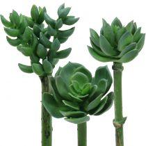 Vetplanten gesorteerd 11cm 3st