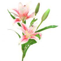 Tijgerlelie roze, wit 60cm