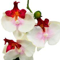 Tafeldecoratie orchidee in crèmepot H29cm