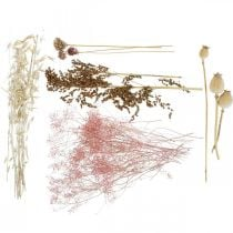 Gedroogde Bloemen Doos Wit-Roze Mix Gedroogde Bloemen Set