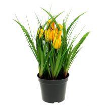 Tulpen in pot geel 30cm