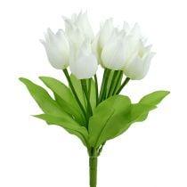Tulpenstruik wit 30cm