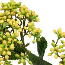 Viburnum bessentak 54cm geel 4st