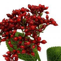 Bessentak Rode planten van viburnum 54cm 4st