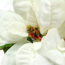 Poinsettia boeket wit 52cm