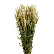 Wheat Bund Natur 1e decoratieve tarwe