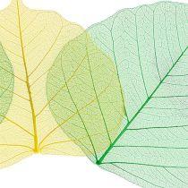 Willow skelet appelgroen / geel 200st.