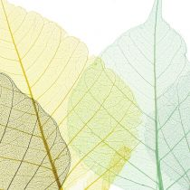 Wilgenbladeren skeletachtig grijs, geel, turquoise 200st
