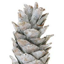 Suiker dennenappel witgekalkt 20cm - 30cm