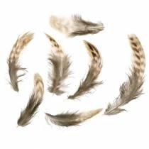 Natuurlijke veren 4,5 - 9cm 20g