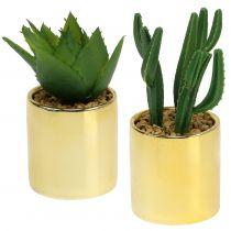 Cactus groen in een gouden pot 12cm - 17cm 4st