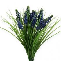 Druivenhyacinten 28cm - 30cm blauw 15st