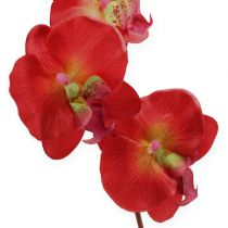 Decoratieve orchidee rood 68cm