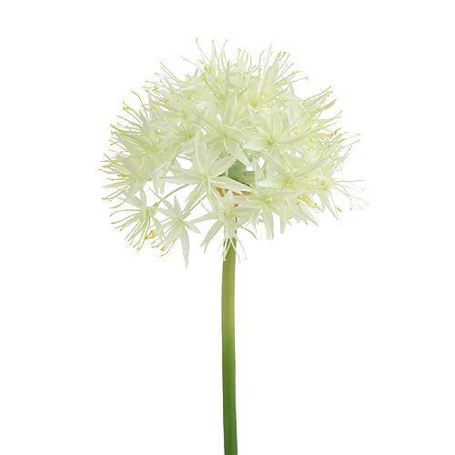 Allium crèmewit L76cm