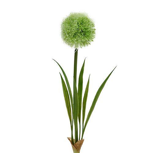 Allium Groen L37.5cm 4st