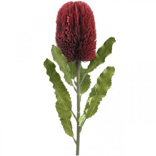 Kunstbloem Banksia Rood Bordeaux Kunst Exoten 64cm